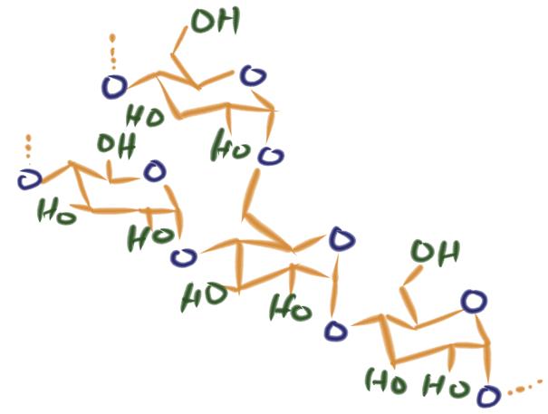 アミロペクチン構造式
