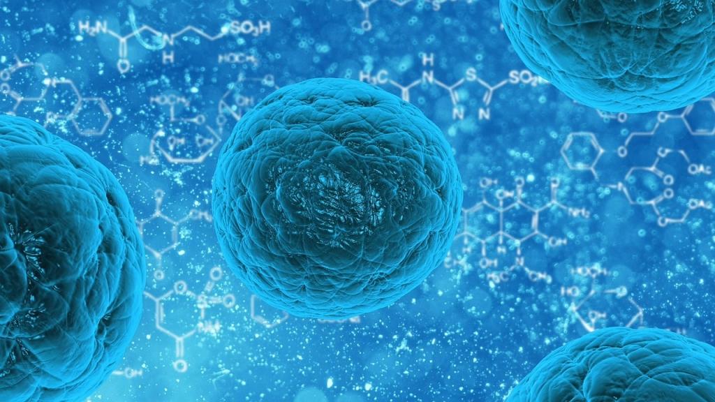 細胞の拡大イメージ