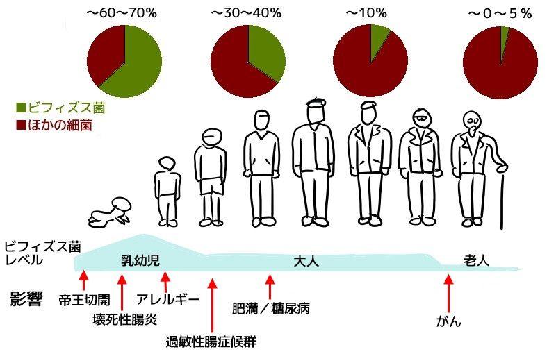 ビフィズス菌の腸内レベルの変化