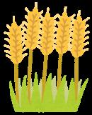 麦芽とイソマルトオリゴ糖
