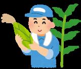 トウモロコシとキシロオリゴ糖